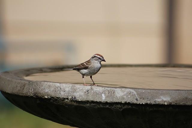 Vogeltränke aus Beton
