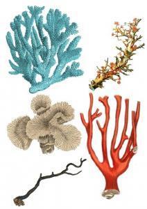 Korallen aus Gips